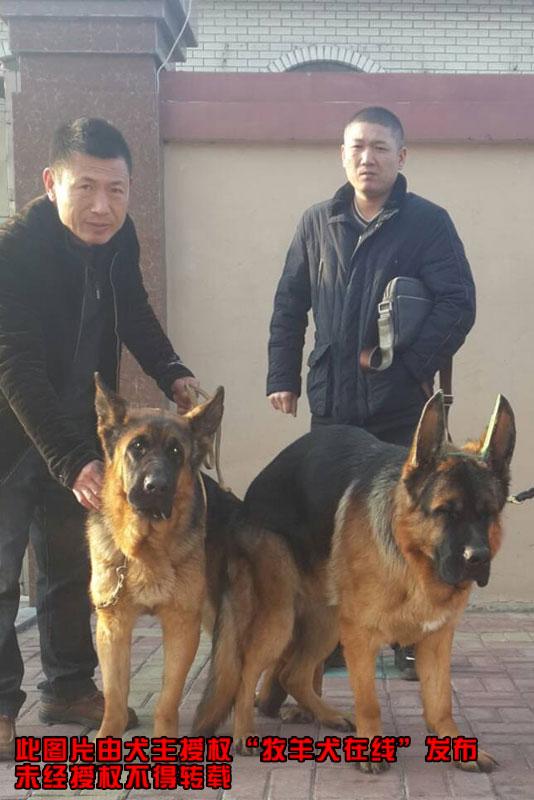 1月24日统一配秦皇岛怪兽犬业黑神直女